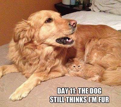 dogcatfur-a