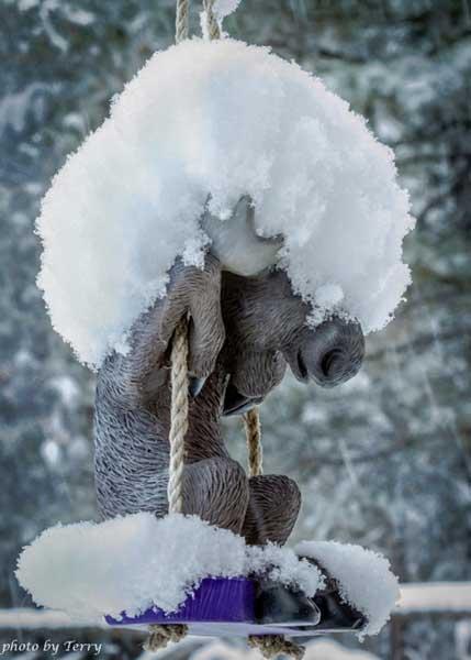 121212profile-moose-b