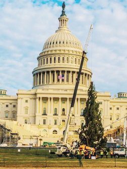 2016capitoltree