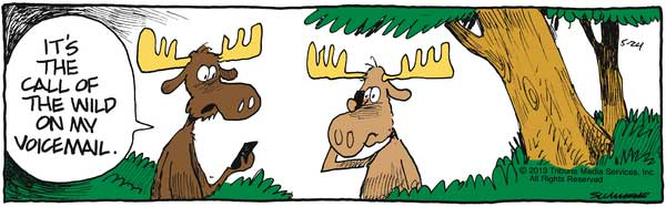 moosevoicemail
