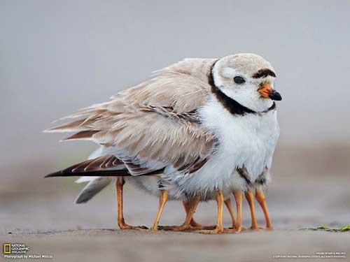 coldbirds-a
