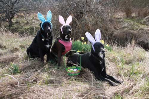 EasterDogs-a