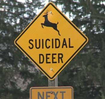 DeerXingSuicidal-a
