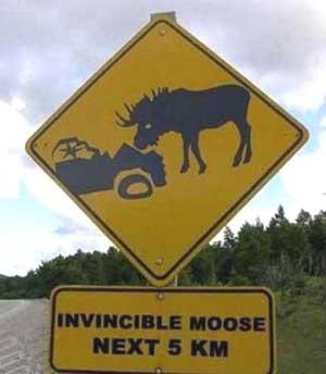 InvincibleMoose-a