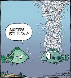 FishHotflash-a