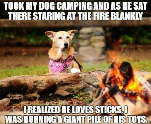 DogCamping-a