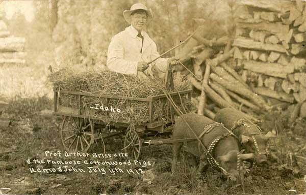 1912CottonwoodPigs-a