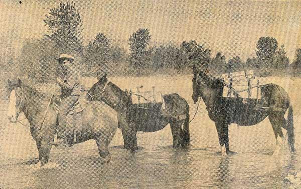 Mule-Train-3-a