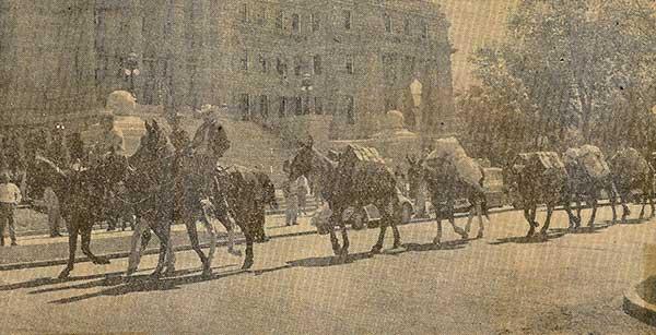 Mule-Train-5-a