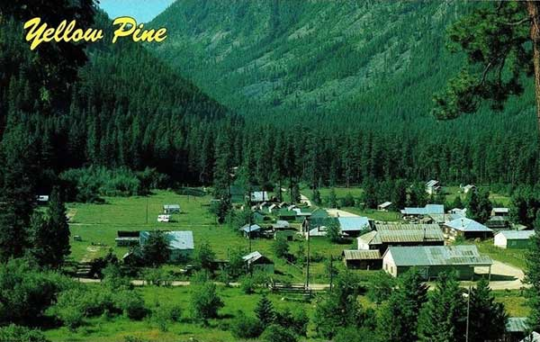 YellowPineC1950-a