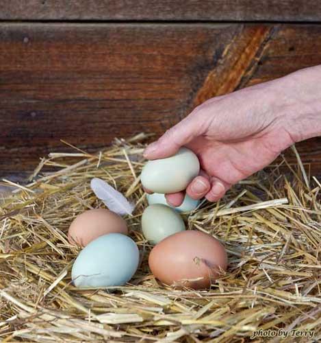 12-egg6-b