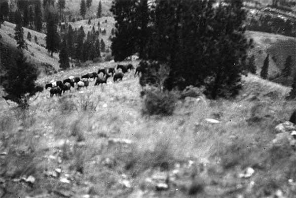 1905StonebrakerPackString-a