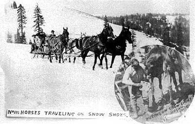 Snowshoes5-a