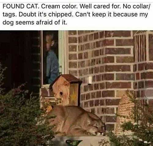 CatFound-a